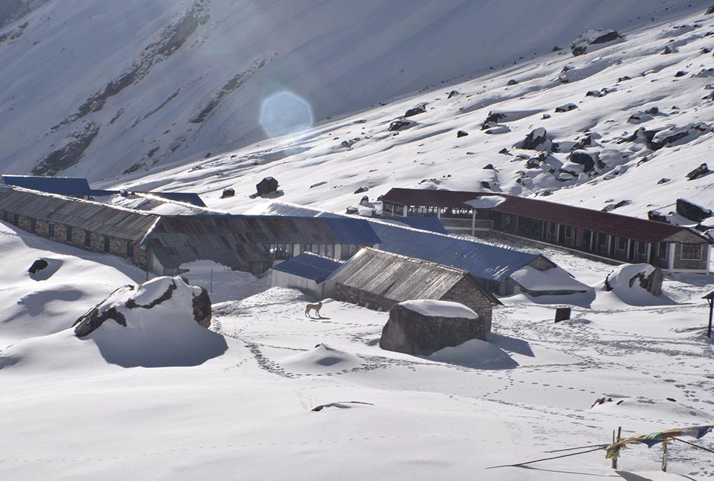 nepal tea house trekking