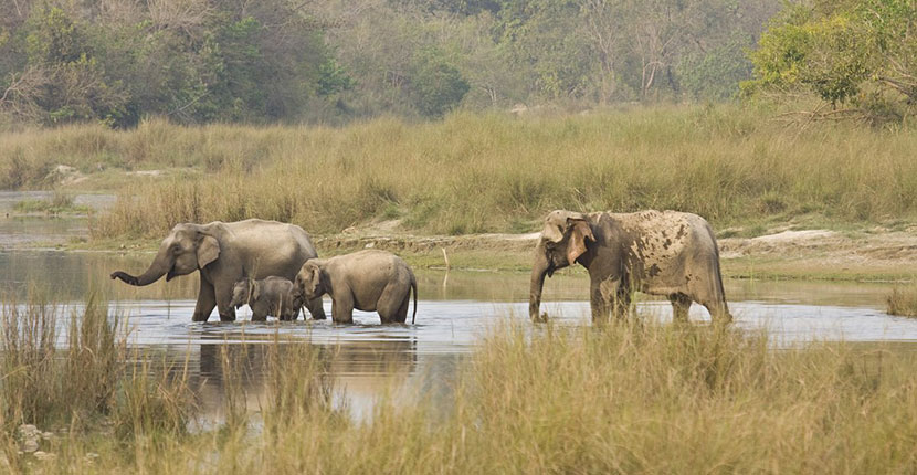 Bardia National Park (1)