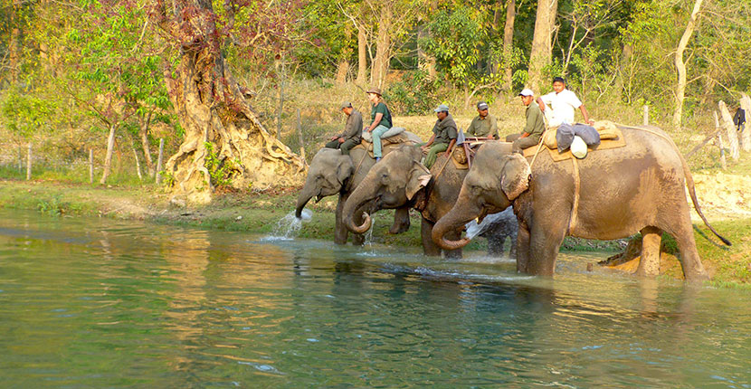 Bardia National Park (2)
