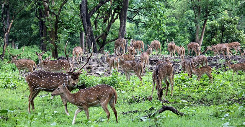 Bardia National Park (4)
