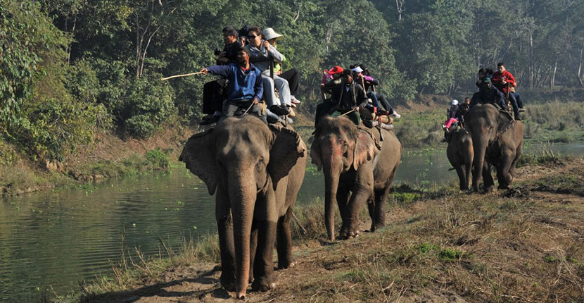 Nepal Jungle Safari Tours (1)