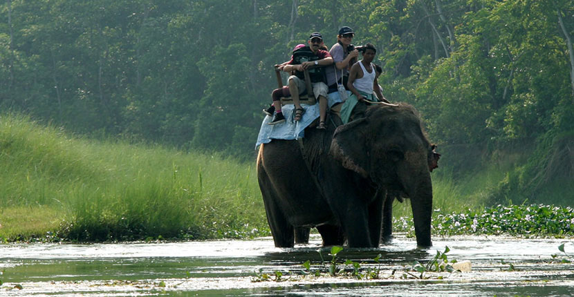 Nepal Jungle Safari Tours (2)
