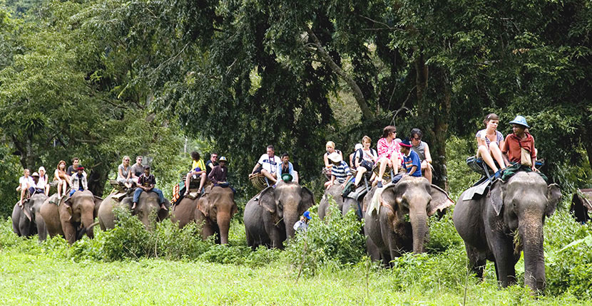 Nepal Jungle Safari Tours (4)