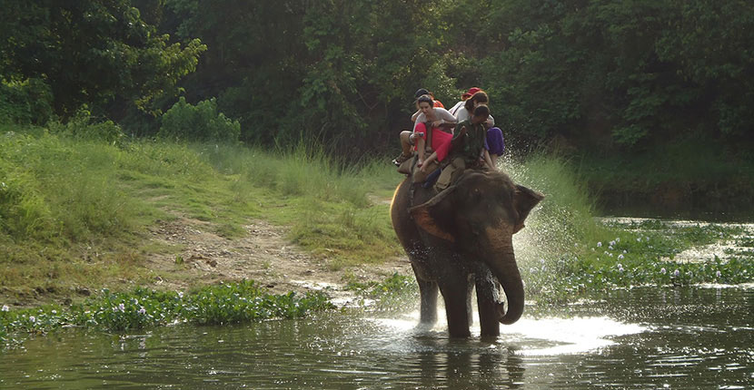 Nepal Jungle Safari Tours (6)