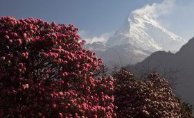Annapurna Base Camp Distance